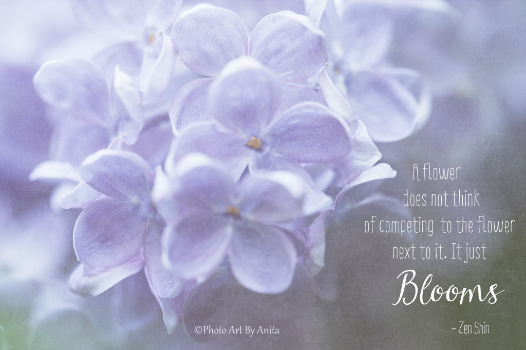 Lilacs with Quote