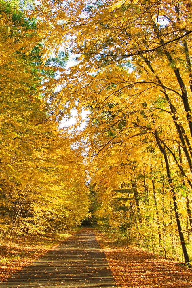 Rail Trail Foliage October 2015 (5 of 9)